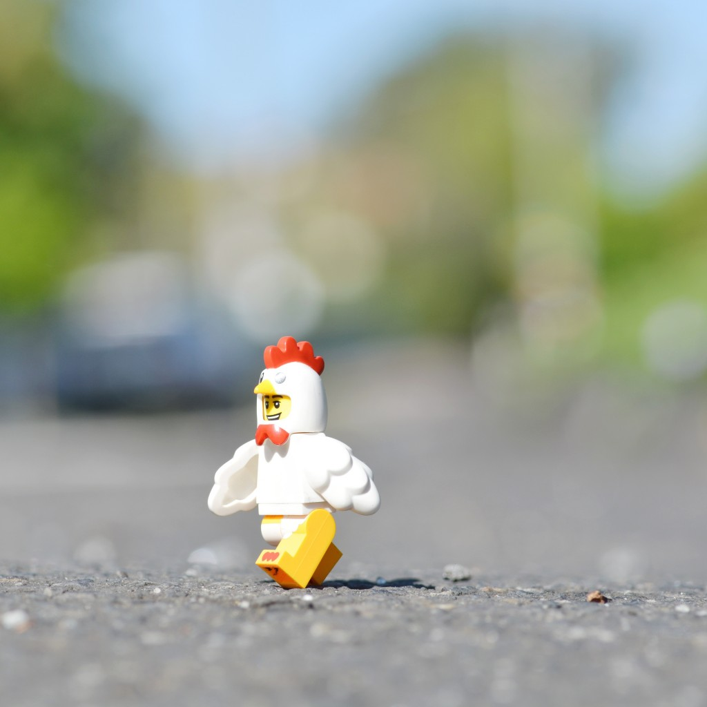 A chicken was taken into custody after it was seen trying to cross a road in Dundee, and now Scottish police ask: why did the chicken cross the road?